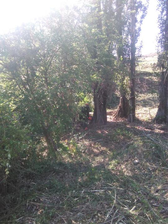 Desbroce, tala y poda en la línea Biascas-Torrelariviera V 0-38