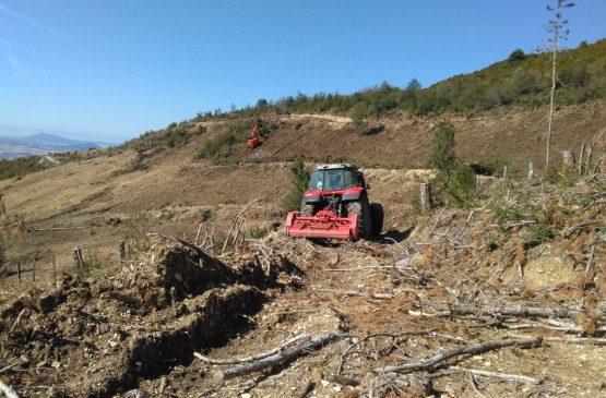 Repoblación forestal Arguiñano-Vidaurre