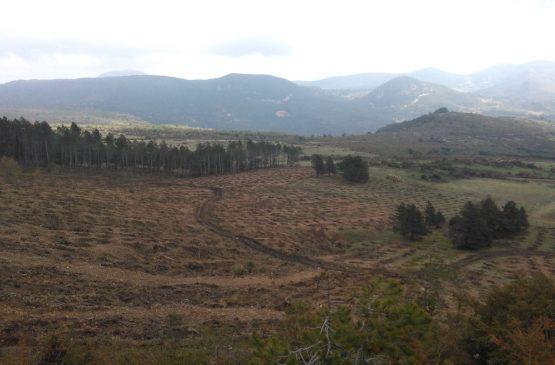 Servicio de repoblación forestal en Arguiñano-Vidaurre