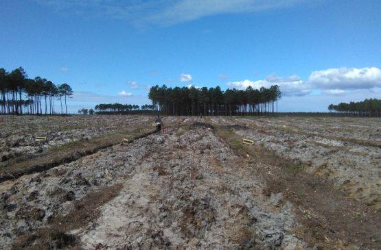 Repoblación forestal en Mezos (Francia)