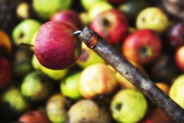Servicios agrícolas. Mantenimiento de manzanos